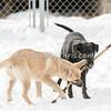 Dogs - Saturday, Feb. 7, 2015 - Frame: 3702