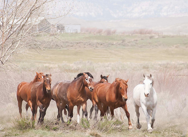 Horses and Wranglers
