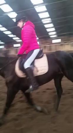 Milou en haar nieuwe paard
