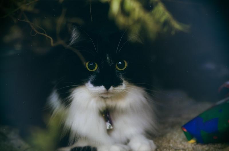 Christmas cat-.jpg