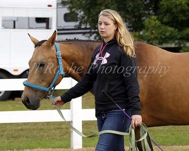 Four Town Fair Horse Show 2016
