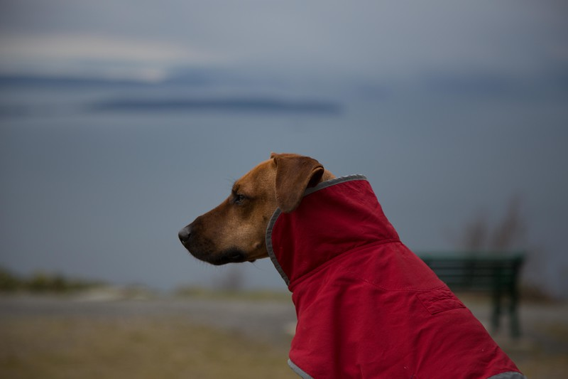 oyster dome-4.jpg