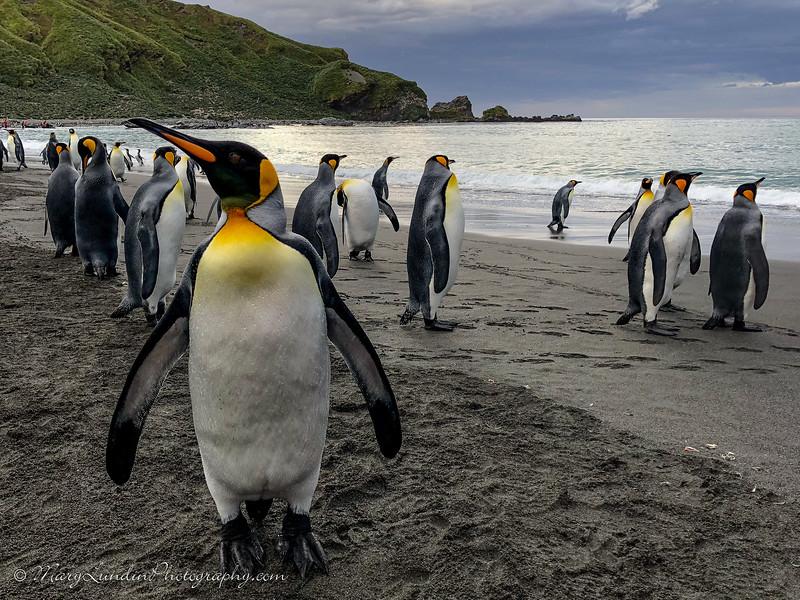 Antarctic-154