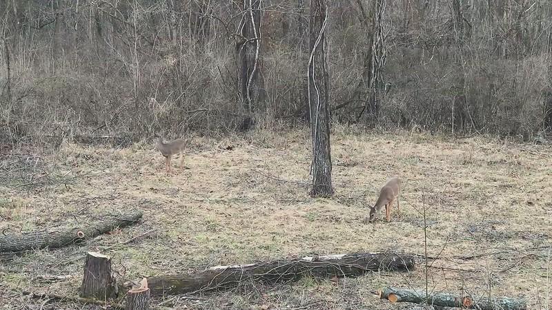 Deer 4_mp4.MP4
