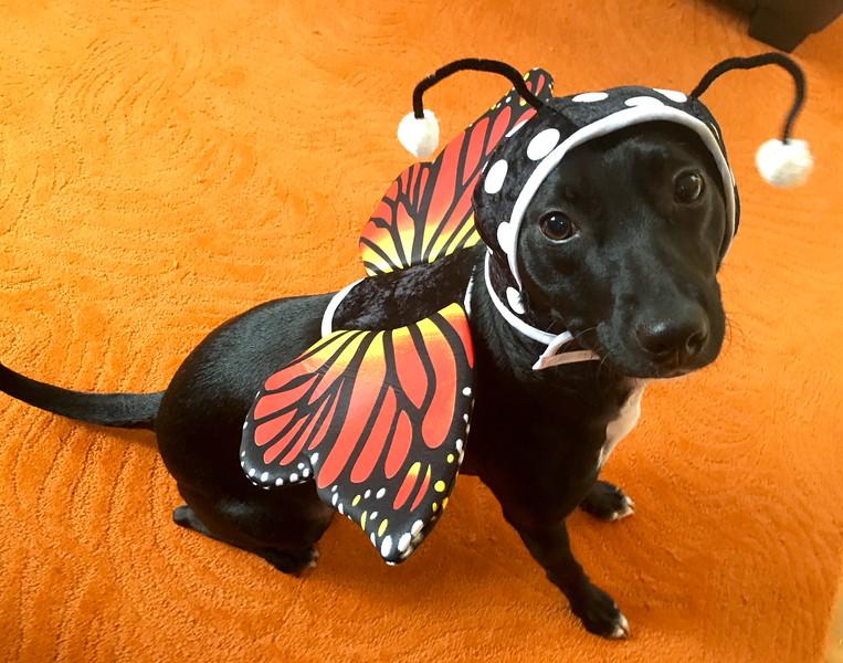 Poppy's costume