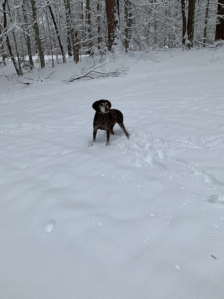 2019.01.13 - Morgen trying to catch snowballs 9.JPG
