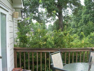 2008-07-14 - Tree Work - Smyrna, GA