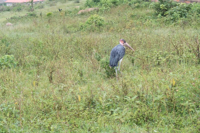 Uganda-0241.jpg