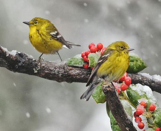 """2011 """"Birds"""" June"""