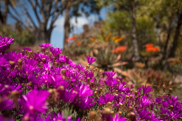 Balboa Park and Gardens