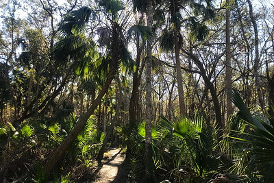 Florida Hikes