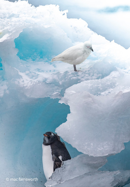 antartica-49.jpg