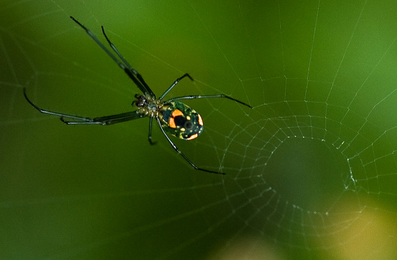 spider-13.jpg