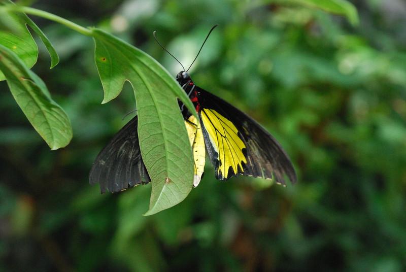Denver Butterfly Pavilion 2432873914.jpg