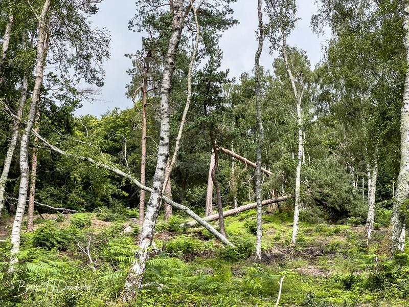 Burton Mill Pond-1135-1.jpg