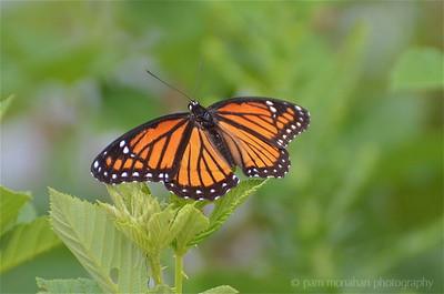 Butterflies, Moths, Bugs, etc.