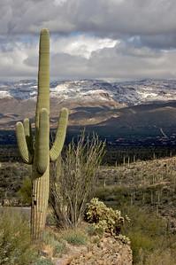 Early spring in the desert