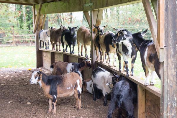 Maplewood Farms