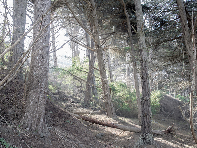 california_17.jpg