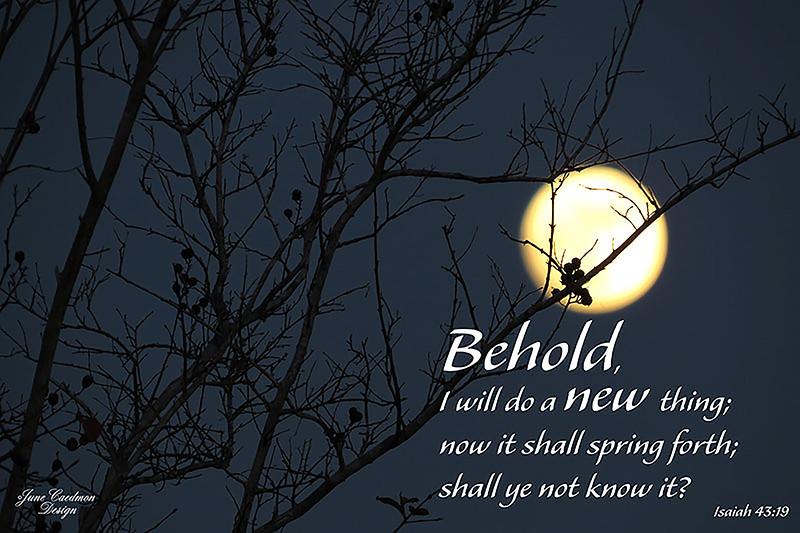 23_Isaiah43-19_JC_2014-12-28.jpg