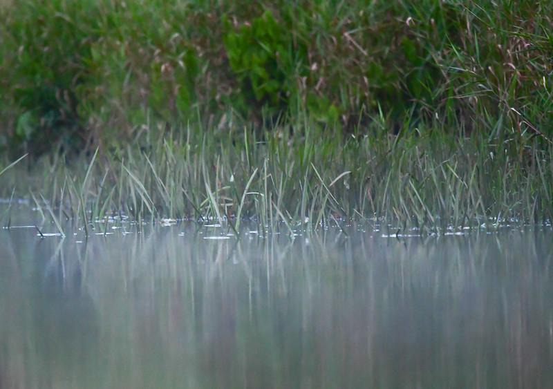 2018-07-29 Wallkill River Nigt Kayaking-DSC_4897-072.jpg