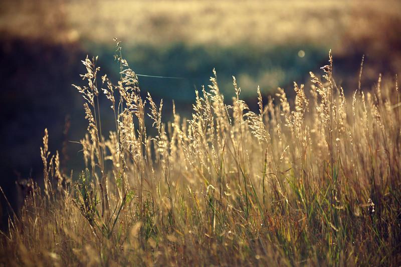 reeds.jpg