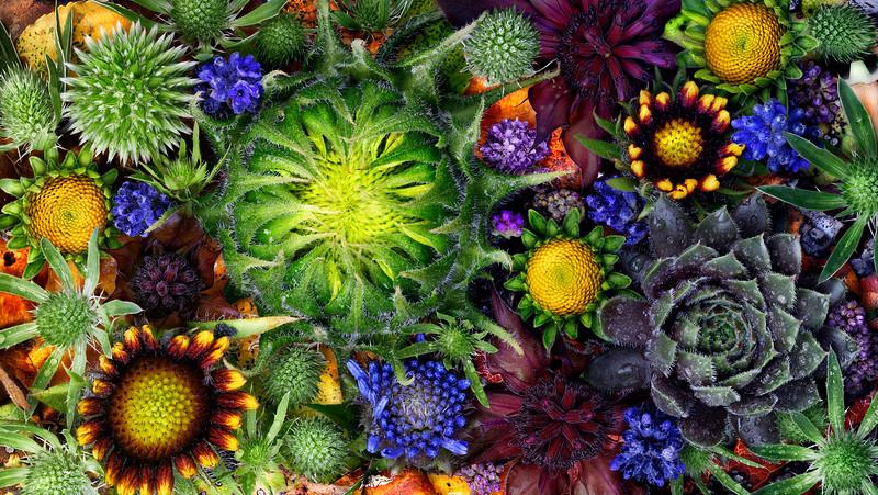 Flower Pano