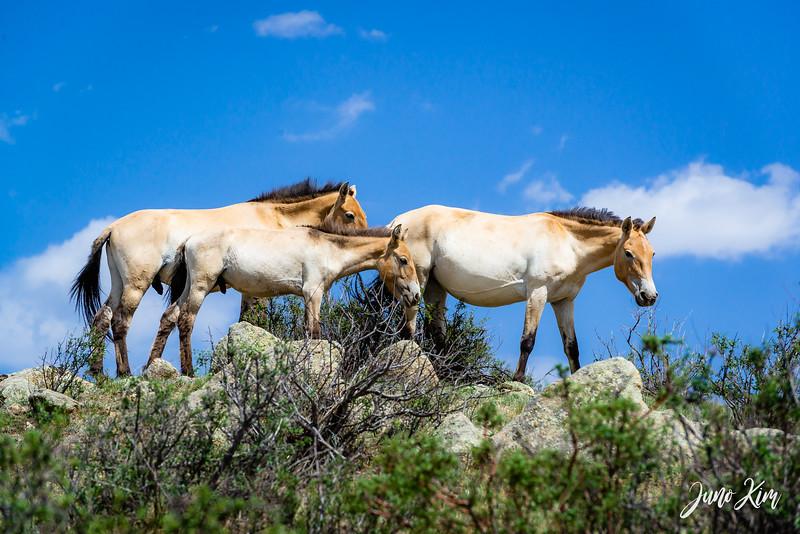 Kustei National Park__6109473-Juno Kim.jpg