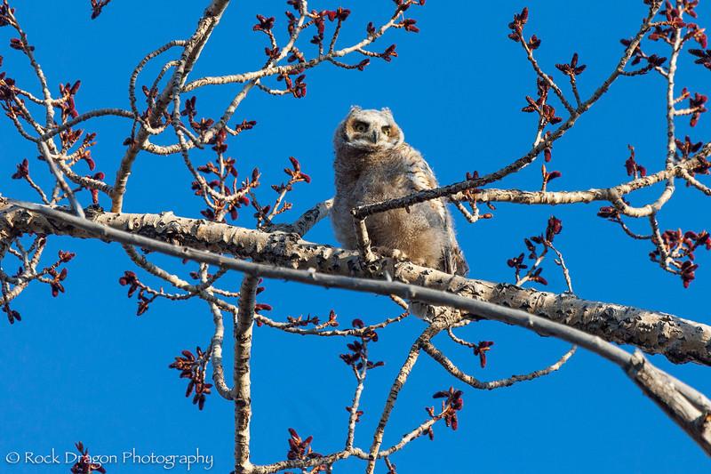 Owl-1.jpg