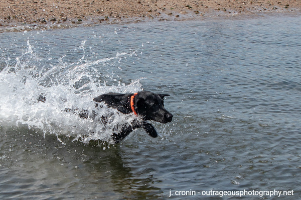Beach Dog August 2020