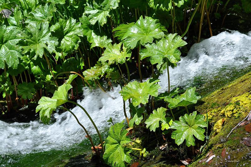 water chute 2 6-3-2012.jpg
