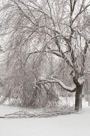 Snowstorm 01-12-2011
