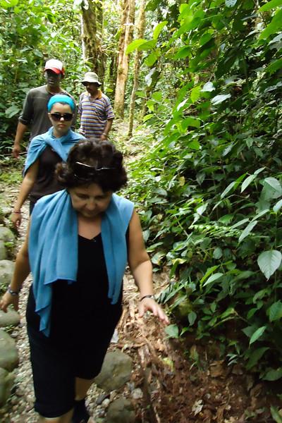 jungle-walk_4894218210_o.jpg