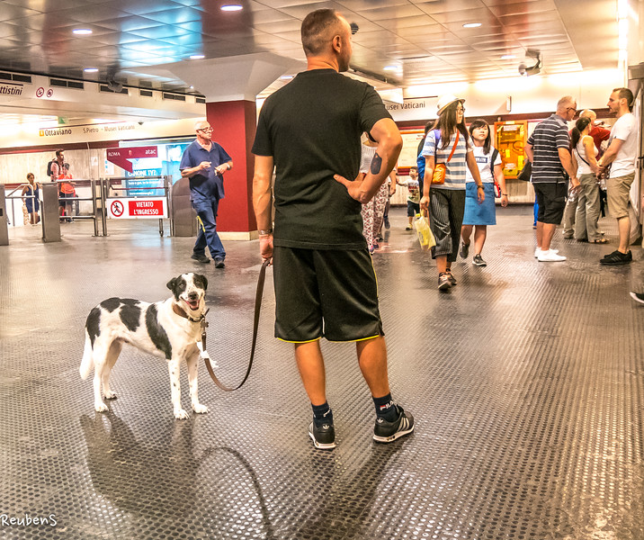 Dog on Subway, Rome-2.jpg