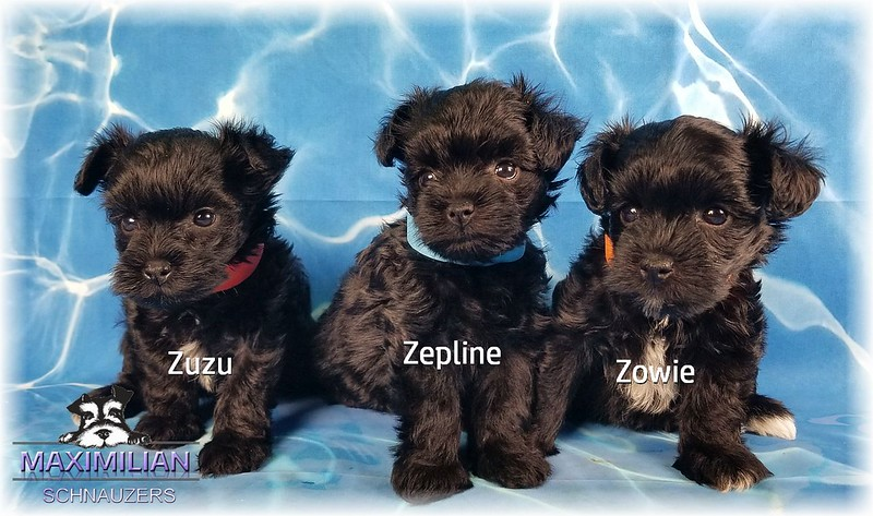 Annie Pups 017.jpg