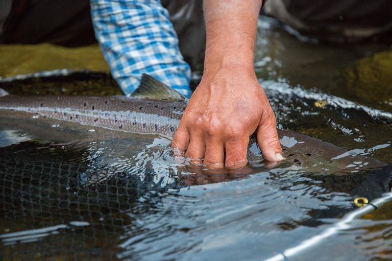 gaspeatlanticsalmonflyfishing2018.bencarmichael (124 of 234).jpg