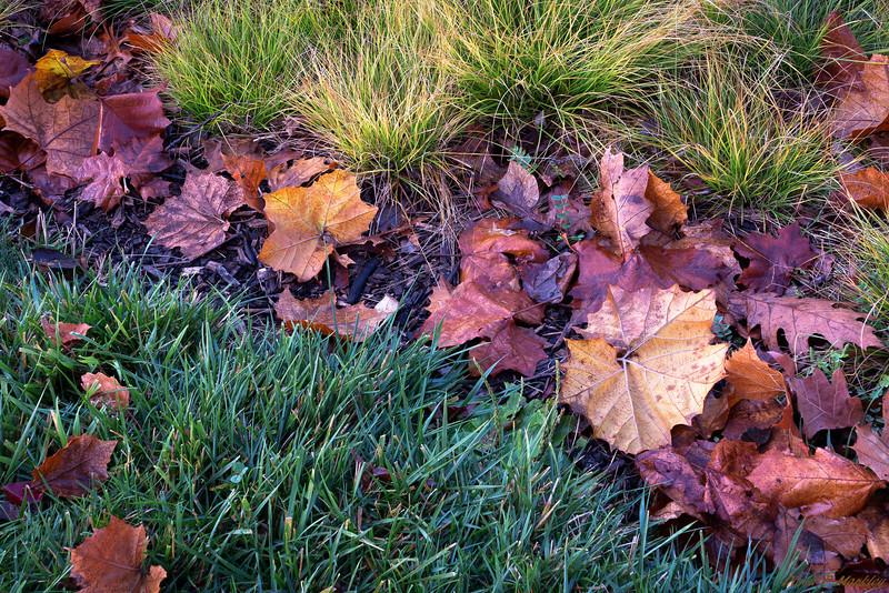 Leaves Landing