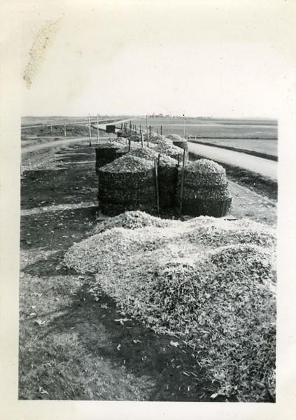 J191.  30,000 Bushels stacked up – Biggest corn crop ever - .jpg