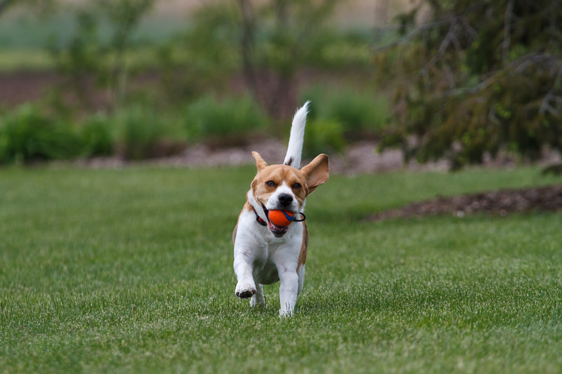 Fetch is a Contact Sport