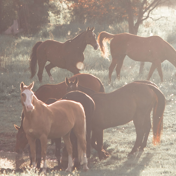HorseSun2.jpg