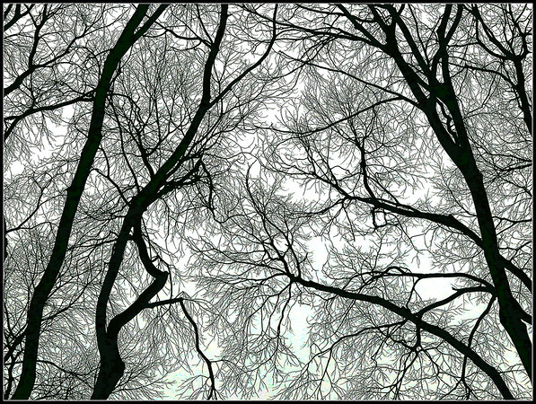 Trees - Branches of trees