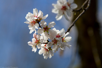 Spring Like 2-14-16