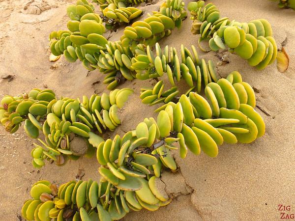 Fauna sand dunes, Namibia