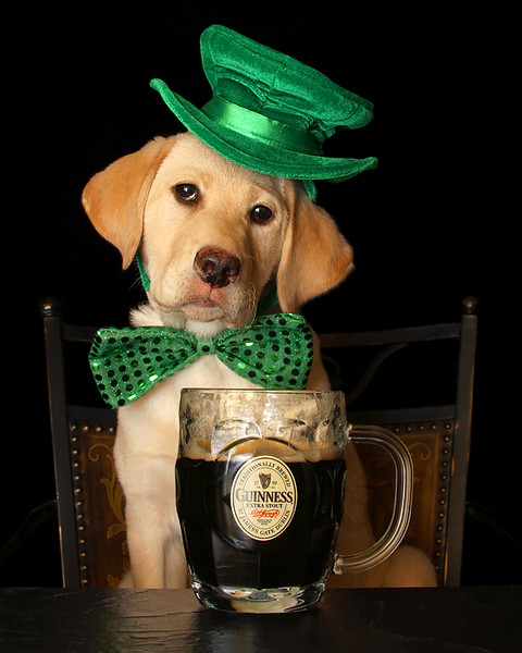 St. Patty Puppy1f copy.jpg