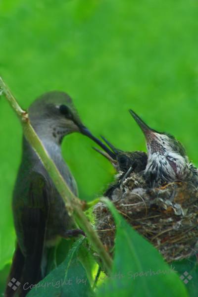 Feeding Time.jpg