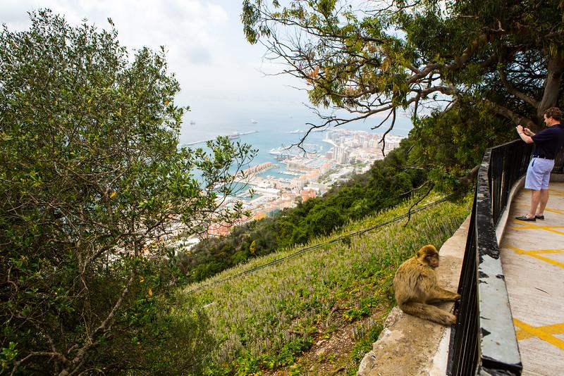 Overlooking Gibraltar Harbor