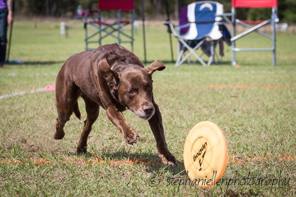 _MG_3173Up_dog_International_2016_StephaniellenPhotography.jpg