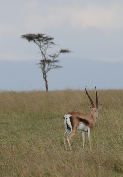 East Africa Safari 33.jpg