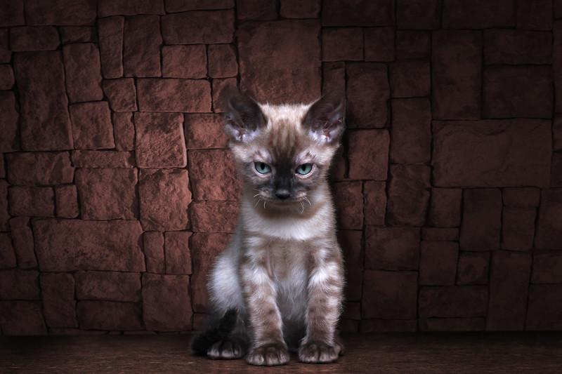 chaton-3.jpg