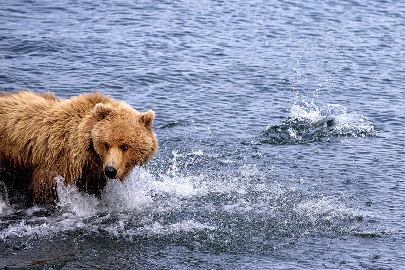 Alaska_2013_FH0T5363.jpg